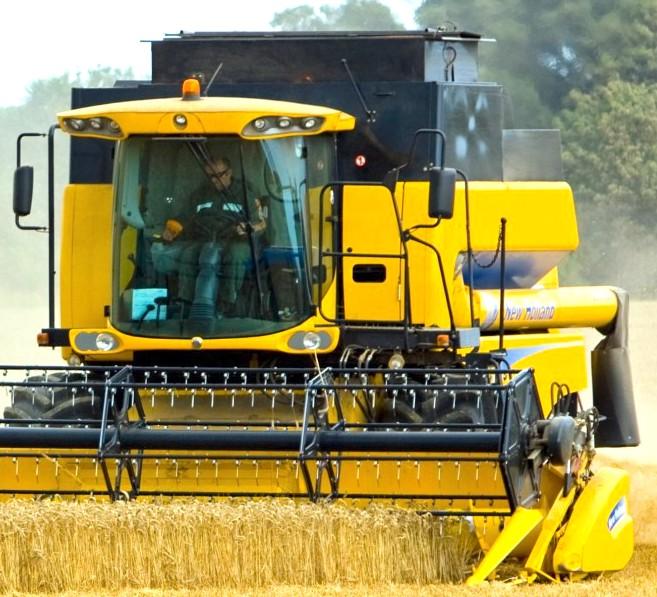 wheat-threshing crop