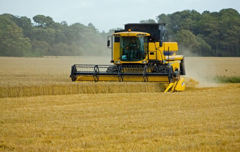 wheat-threshing