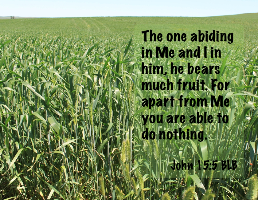 John 15_5 IMG_4781 Abide Bear Much Fruit Apart Nothing