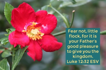 Luke 12_32 ESV Father's Pleasure Give Kingdom