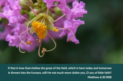 Matthew 6_30 BSB God Clothes Grass Clothe You