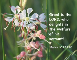 Psalms 35_27 IMG_0659 Great Lord Delights Welfare Servant