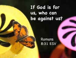 Romans 8_31 IMG_5594-2 If God For Us Who Against