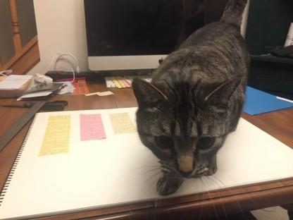 IMG_2767 Cat