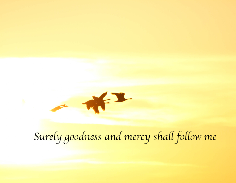 Quoted Photos – Psalm23